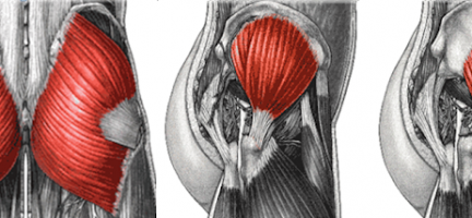 THE GLUTEAL MUSCLES