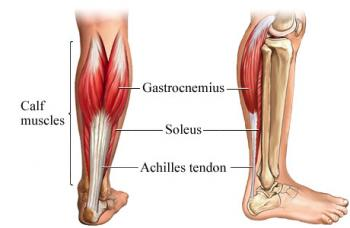 calf_muscles2.img_assist_custom-350x228